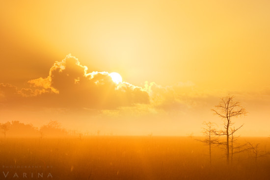 Landscape Photography with a Teleohoto Lens, Everglades National Park, Florida