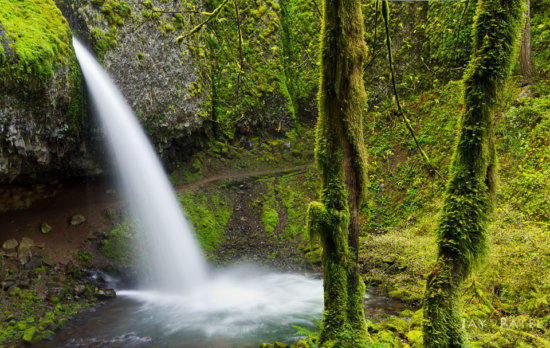 Large distracting tree trunks, Pony Tails waterfall, Oregon by Jay Patel