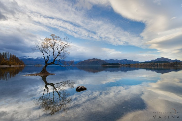 Landscape Photo of Wanka Tree in New Zealand by Varina Patel