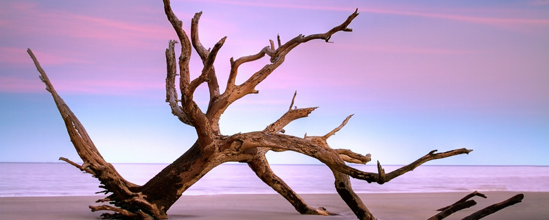 Driftwood Beach by Anne McKinnell